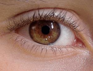 ライトブラウン、ヘーゼル、目